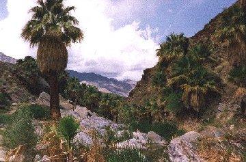 'Palm Canyon, Palm Springs' ... NO PICTURE ? ... PLEASE DROP ME A MESSAGE !