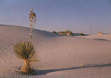 'White Sands' ... NO PICTURE ? ... PLEASE DROP ME A MESSAGE !