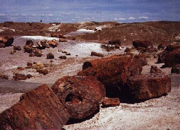 'Petrified Forest N.P.' ... NO PICTURE ? ... PLEASE DROP ME A MESSAGE !