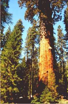 'Sequoia 2' ... NO PICTURE ? ... PLEASE DROP ME A MESSAGE !